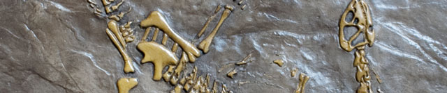 decorative concrete fossil stamps